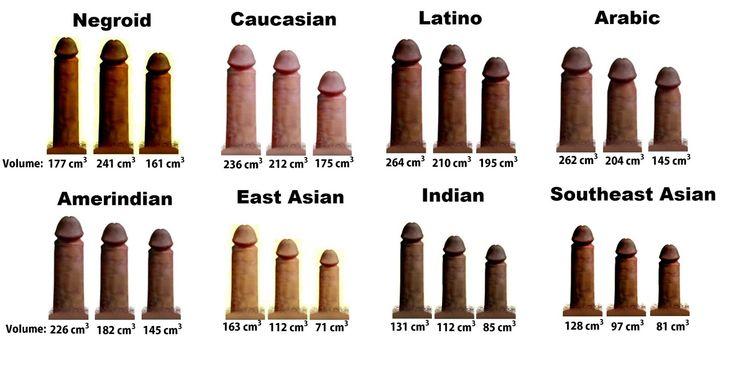 dimensiune medie a penisului