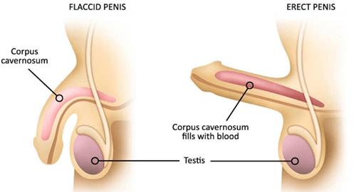 de ce erecția a dispărut la bărbați îmbunătățiți erecția cu ierburi