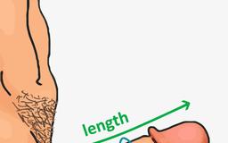 circumferinta penis