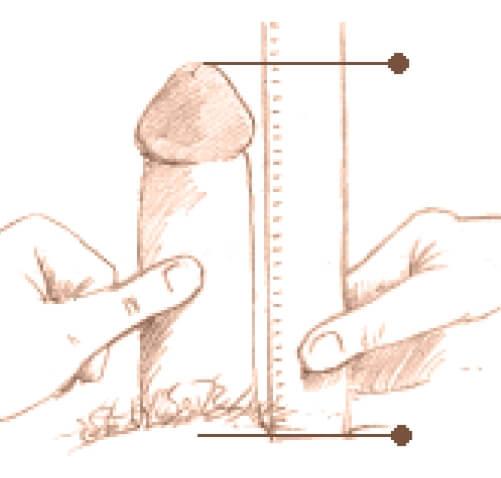 masurare-penis-erectie