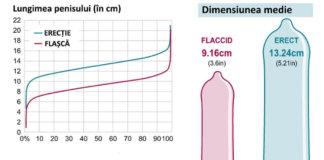 marimea penisului statistici infografic